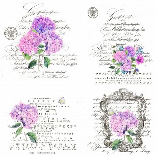 Bügelmotive Hortensien
