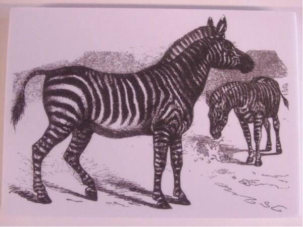"Stempel ""Zebra"""